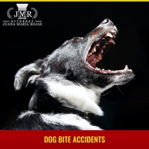 Dog Bite Accidents